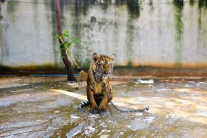 Staying put and feeling like this poor tiger? Do something about it!